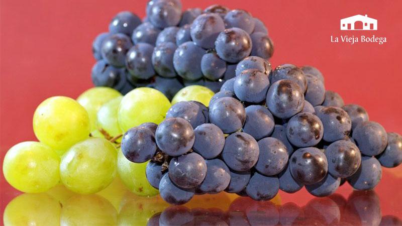 Composición del vino | La Vieja Bodega
