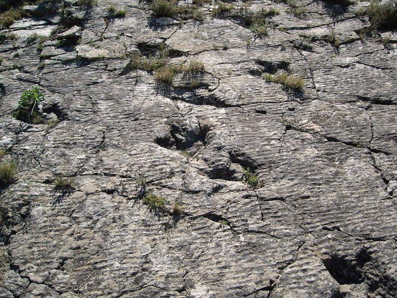 Ruta de dinosaurios en La Rioja   La Vieja Bodega